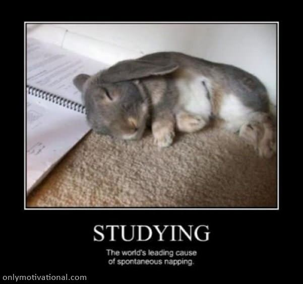 studying and napping